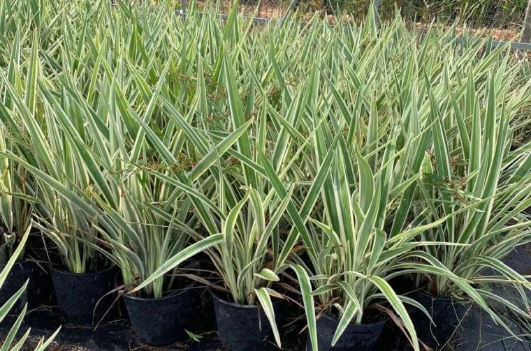 11月份常用的30种花境植物_42
