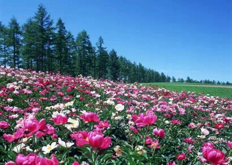 园林地被植物应用,齐了!_3