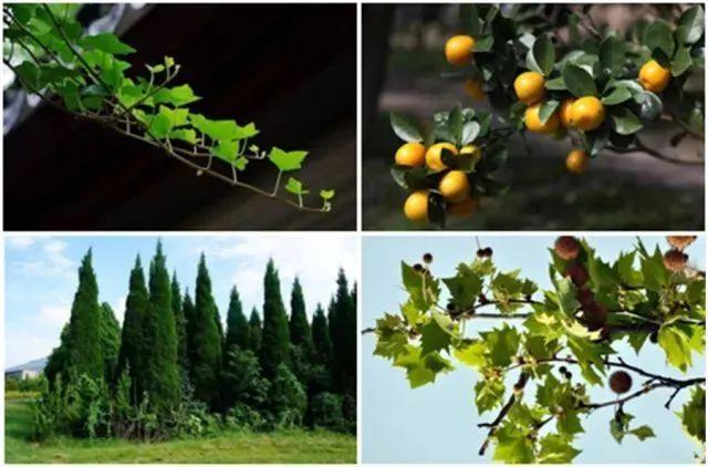 医疗康养空间中的植物景观设计_9