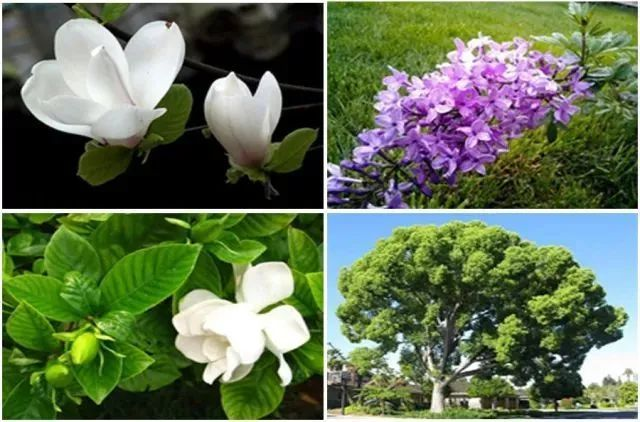 医疗康养空间中的植物景观设计_10