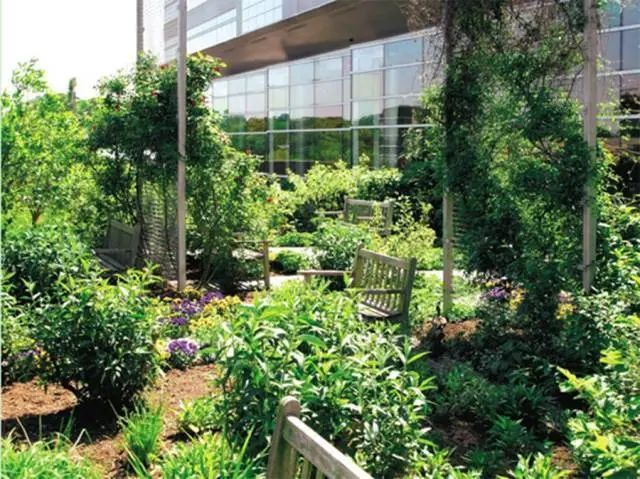医疗康养空间中的植物景观设计_8