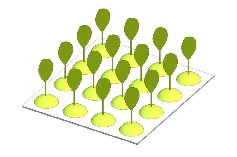 如何打造干旱时期的花园?联想ing_17