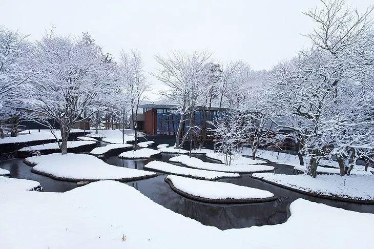 如何打造干旱时期的花园?联想ing_37