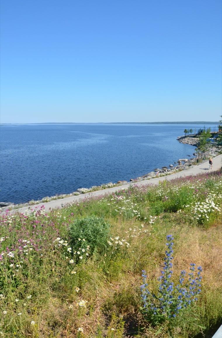 芬兰Ranta-Tampella公共空间实景图6