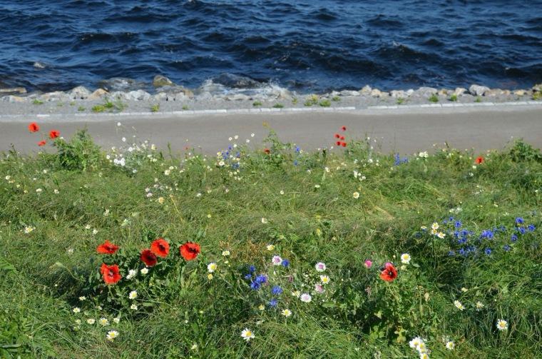芬兰Ranta-Tampella公共空间实景图8