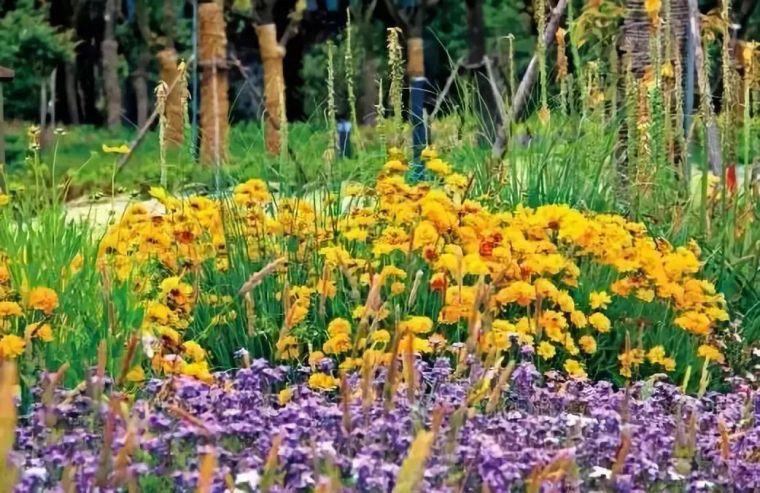 干货 植物景观设计总则_17
