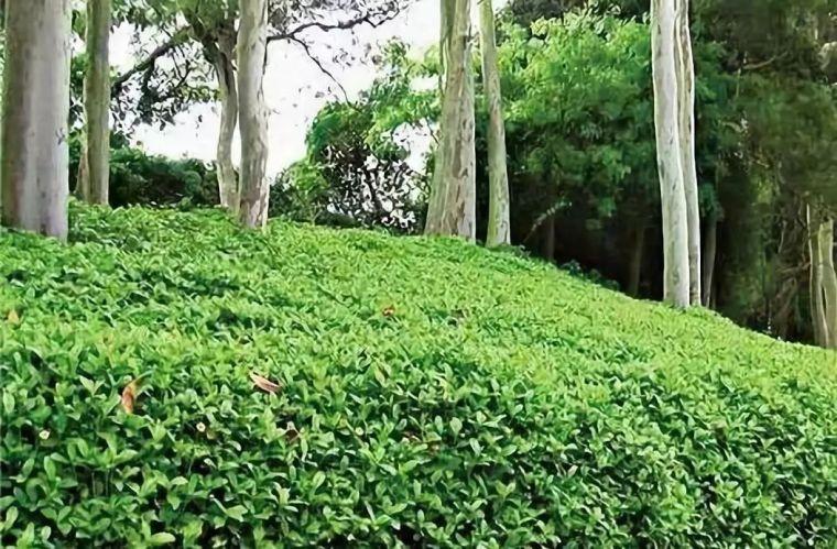 干货 植物景观设计总则_38