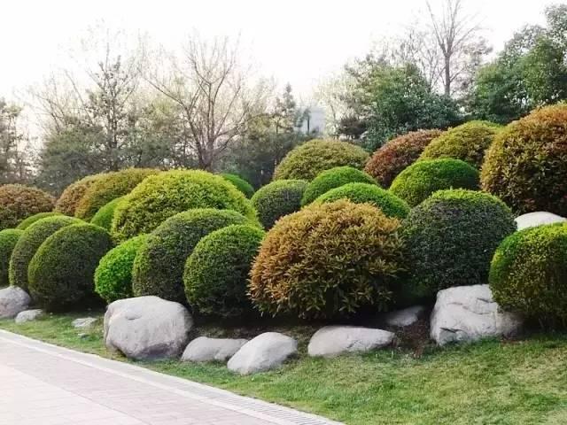 干货 植物景观设计总则_2