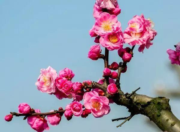 中式园林造景的经典植物!_11
