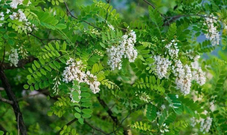 中式园林造景的经典植物!_15