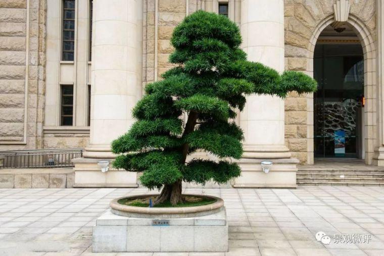 中式园林造景的经典植物!_16