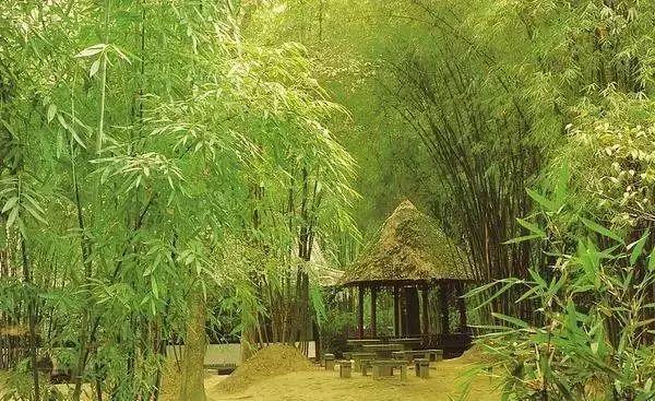 中式园林造景的经典植物!_4