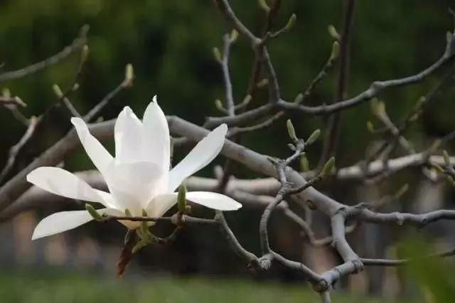 中式园林造景的经典植物!_6