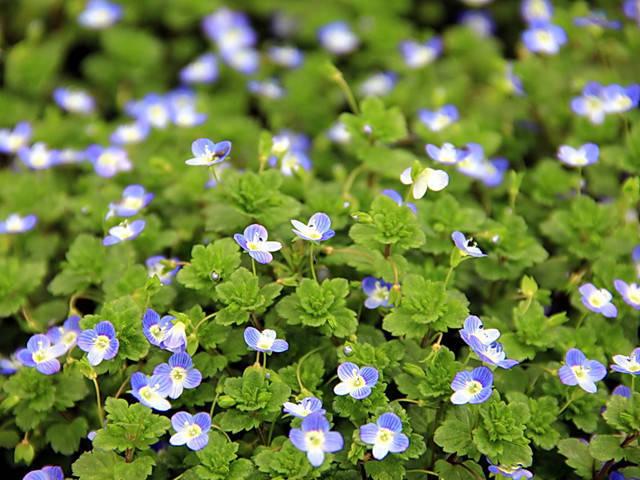 近百种户外植物名称大全_2