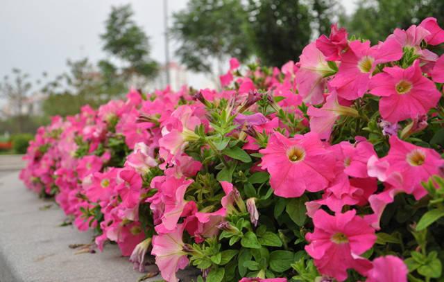 近百种户外植物名称大全_1