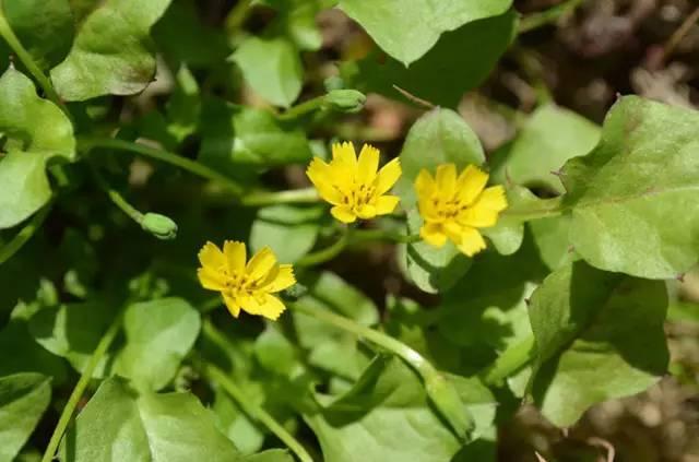 近百种户外植物名称大全_23