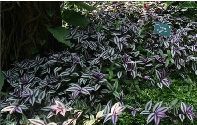 近百种户外植物名称大全_24