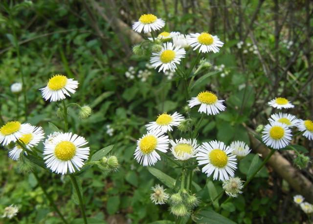 近百种户外植物名称大全_28