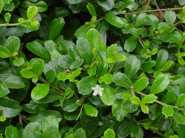 近百种户外植物名称大全_32