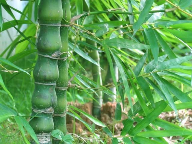 近百种户外植物名称大全_31