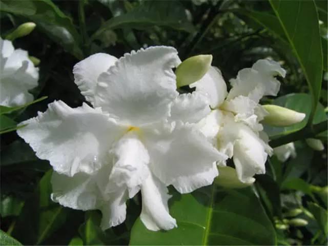 近百种户外植物名称大全_33