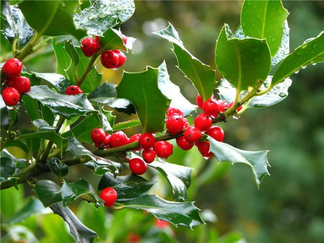 近百种户外植物名称大全_34