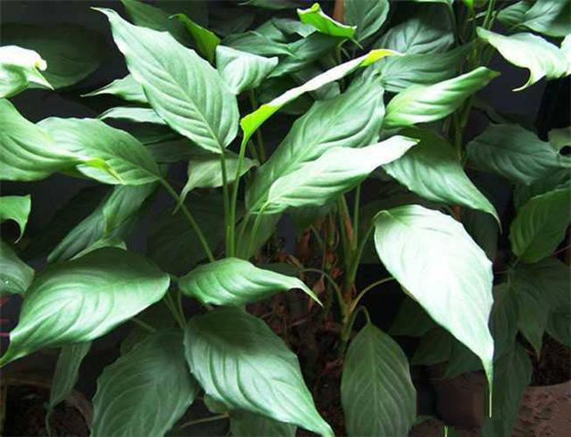 近百种户外植物名称大全_37