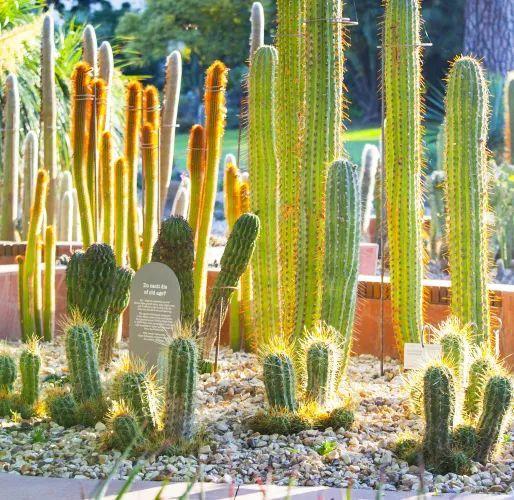 漂亮!维多利亚皇家植物园新干旱花园上线_11