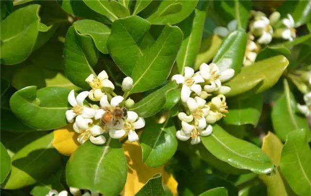 近百种户外植物名称大全_39