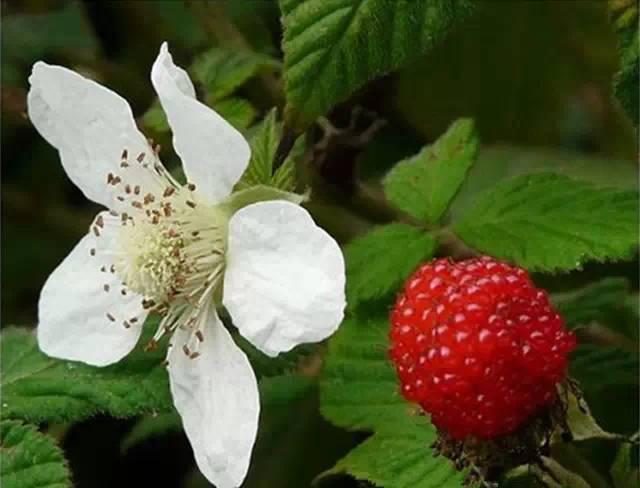近百种户外植物名称大全_40