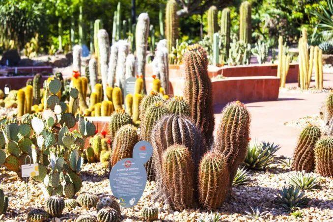 漂亮!维多利亚皇家植物园新干旱花园上线_14