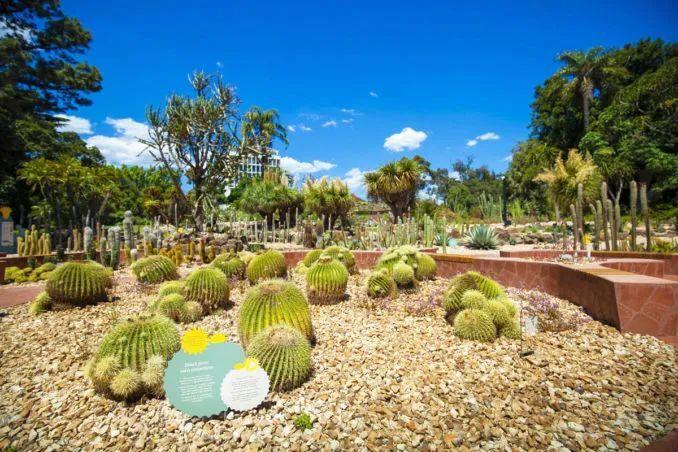 漂亮!维多利亚皇家植物园新干旱花园上线_16