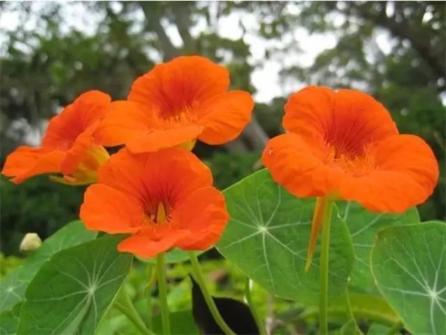 近百种户外植物名称大全_43