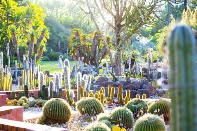 漂亮!维多利亚皇家植物园新干旱花园上线_17