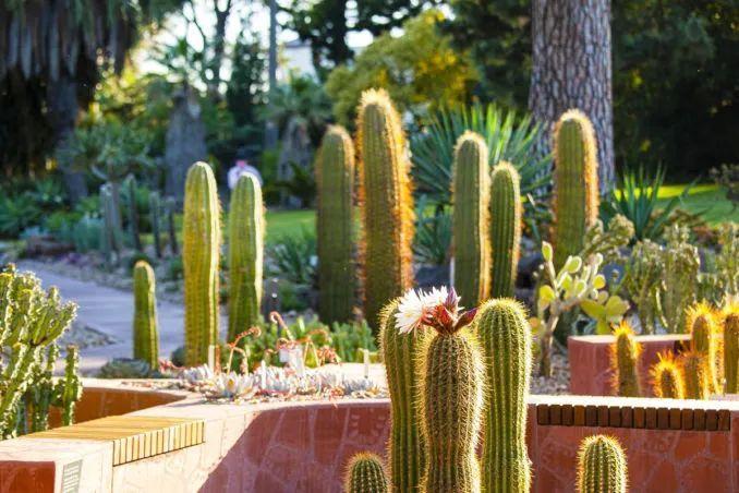 漂亮!维多利亚皇家植物园新干旱花园上线_20