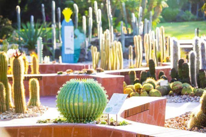 漂亮!维多利亚皇家植物园新干旱花园上线_19