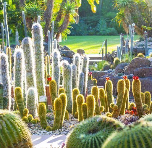 漂亮!维多利亚皇家植物园新干旱花园上线_18