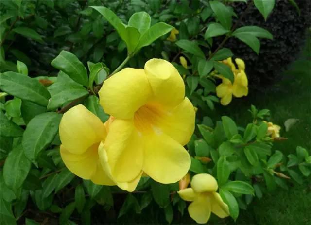 近百种户外植物名称大全_46