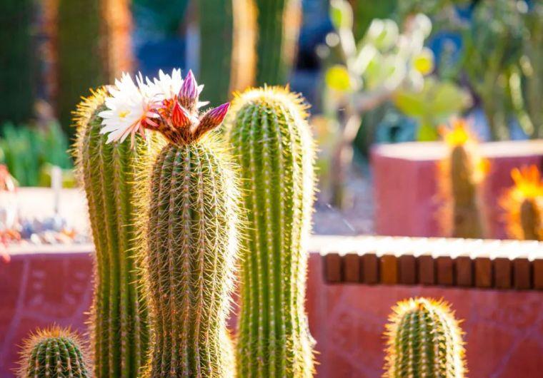 漂亮!维多利亚皇家植物园新干旱花园上线_22