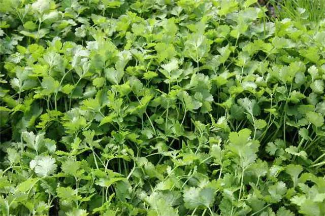 近百种户外植物名称大全_49