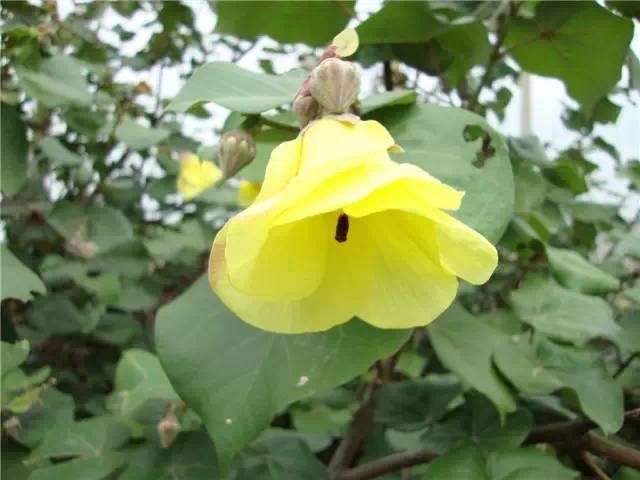近百种户外植物名称大全_48