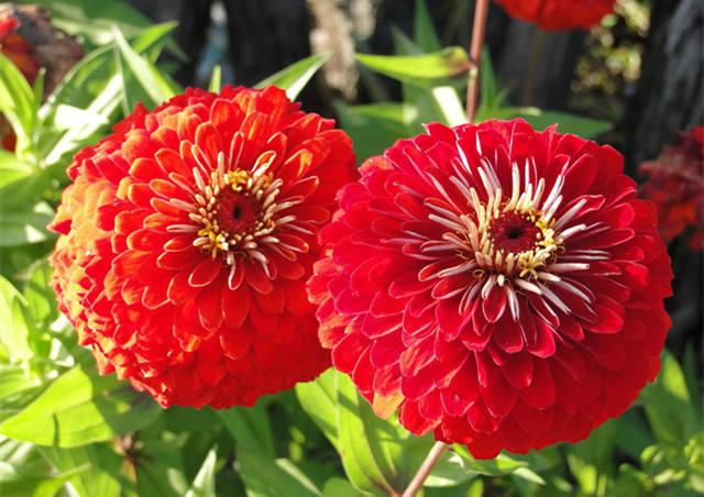 近百种户外植物名称大全_4
