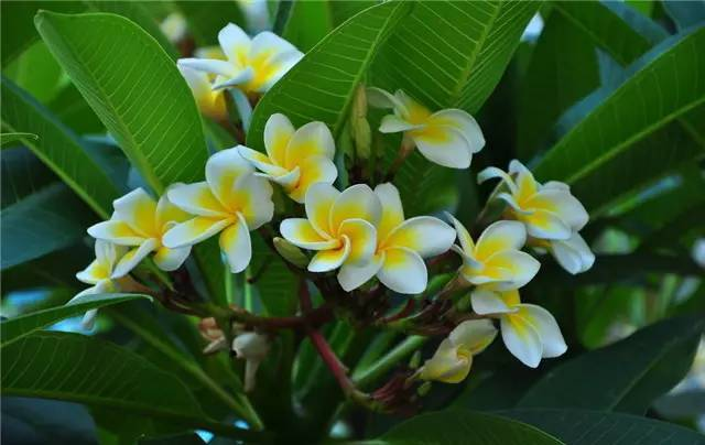 近百种户外植物名称大全_52