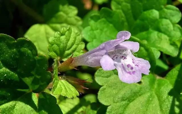 近百种户外植物名称大全_50