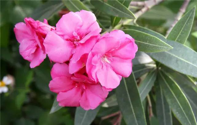 近百种户外植物名称大全_53