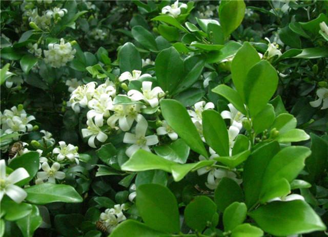 近百种户外植物名称大全_60