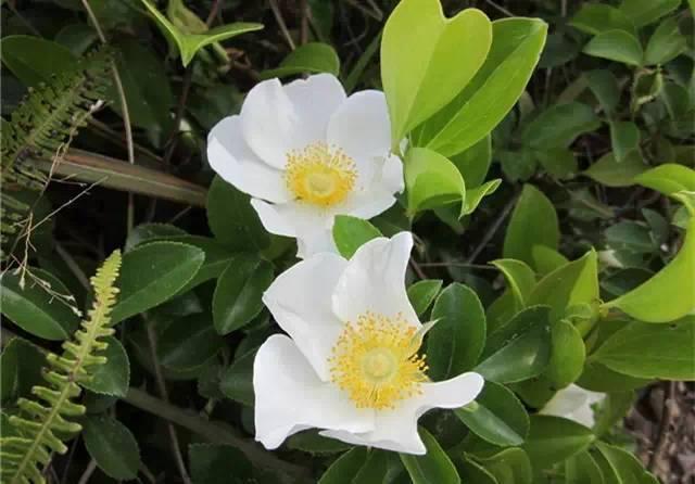 近百种户外植物名称大全_59