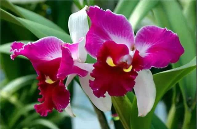 近百种户外植物名称大全_63
