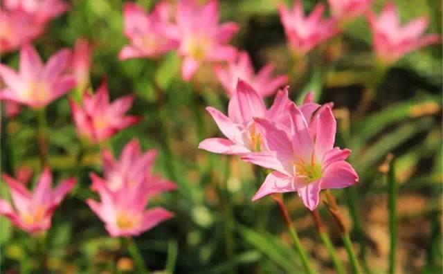 近百种户外植物名称大全_61