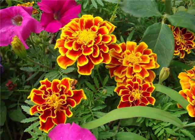近百种户外植物名称大全_65